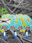 Organic Nanocomposites Hold Promise for Development of Biodegradable Displays
