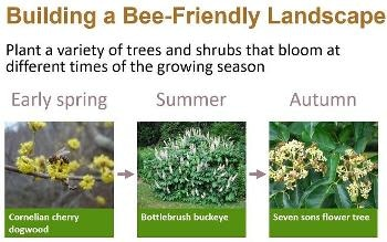 Researcher Offers a List of Recommendations to Develop a Bee-Friendly Landscape