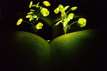 Glowing Plants Could Light the Way for Sustainable Buildings