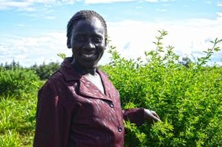 Study: Agroforestry Overlooked in Global Climate Change Reporting Systems