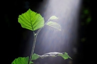Researchers Solve a Controversial Questions on Photosynthesis