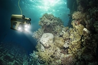 600-Year-Old Marine Sponge Holds Record of Past Ocean Temperatures