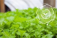 Study Aims to Develop Better Food Safety Testing for Leafy Greens