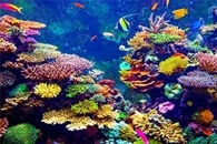 Extreme Storm Flooding Polluted Coral Reefs More than 100 Miles Offshore