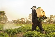Pesticides Heavily Contaminate Small Streams in Agricultural Landscape