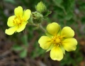 Tracking Climate Change by Observing Flowers