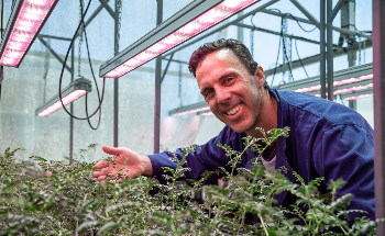 New Technology to Speed Up the Development of More Resilient Crops
