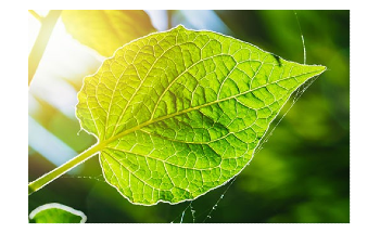 Researchers Use Photosynthesis to Achieve Record Solar-to-Fuel Conversion Efficiency