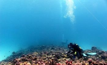 Coral Recovery Following Prolonged Heatwaves