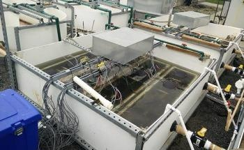 New Microbial Fuel Cell System Effectively Purifies Wastewater