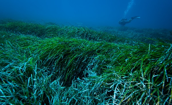 Seagrass Helps to Eliminate Plastics from Coastal Areas