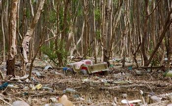 River-Borne Plastic Pollution Considerably Affects Southeast Asian Mangroves