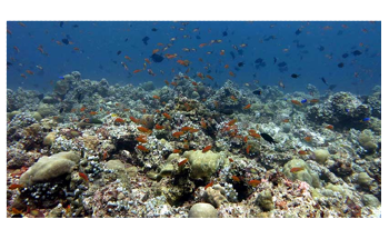 Predatory Reef Fish Rely on Food Resources from Open Ocean, not from Reef