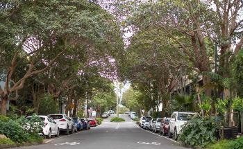 Turning Grey to Green in Sydney's Urban Jungle