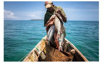 Study Assesses Long-Term Impacts of Two Fisheries Management Methods