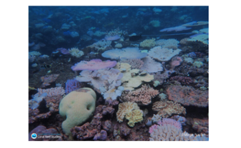 Drastic Reductions in Global Carbon Emissions is Required to Save Coral Reefs