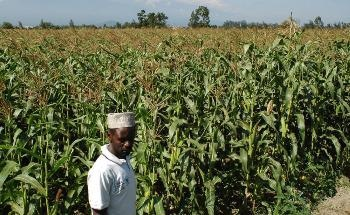 Tanzania and IFAD Partner to Boost Productivity, Improve Food Security and Build Resilience of Small-Scale Farmers in the Face of the Climate Change