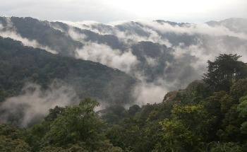 Africa's Mountain Forests have Higher Carbon Storing Capacity but are Depleting Fast