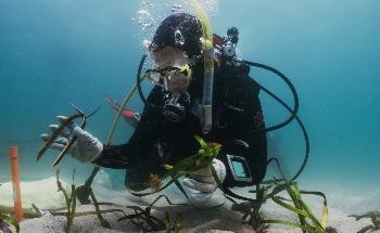 Doing Poseidon's Work: How Citizen Scientists are Helping to Restore Endangered Seagrass
