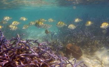 Coastal Communities at Risk as Coral Reefs' Ability to Provide Ecosystem Services Steadily Declines