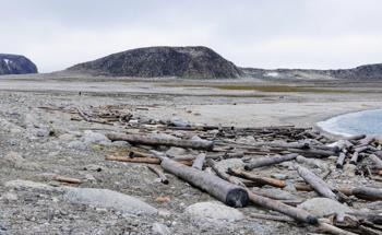 500-Year History of Driftwood Reflects Accelerated Ice Loss in the Warming Arctic